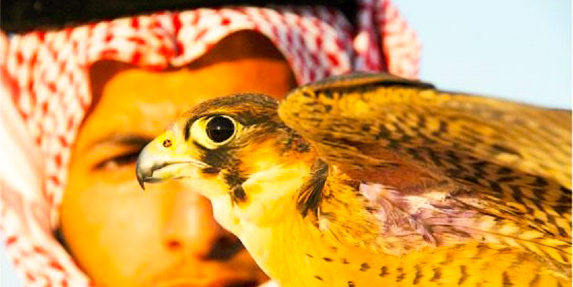 Falconry has a long history stretching from ancient Mongolia to Europe and the Middle East.