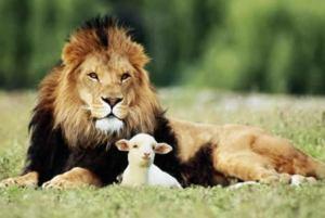Peace lion lamb